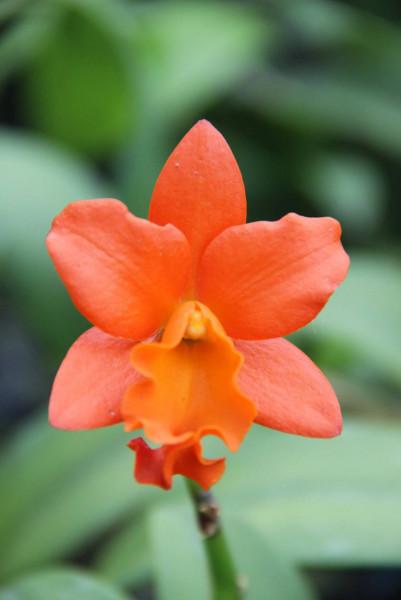 การผลิตกล้วยไม้เพื่อการค้า / Commercial Orchid Production